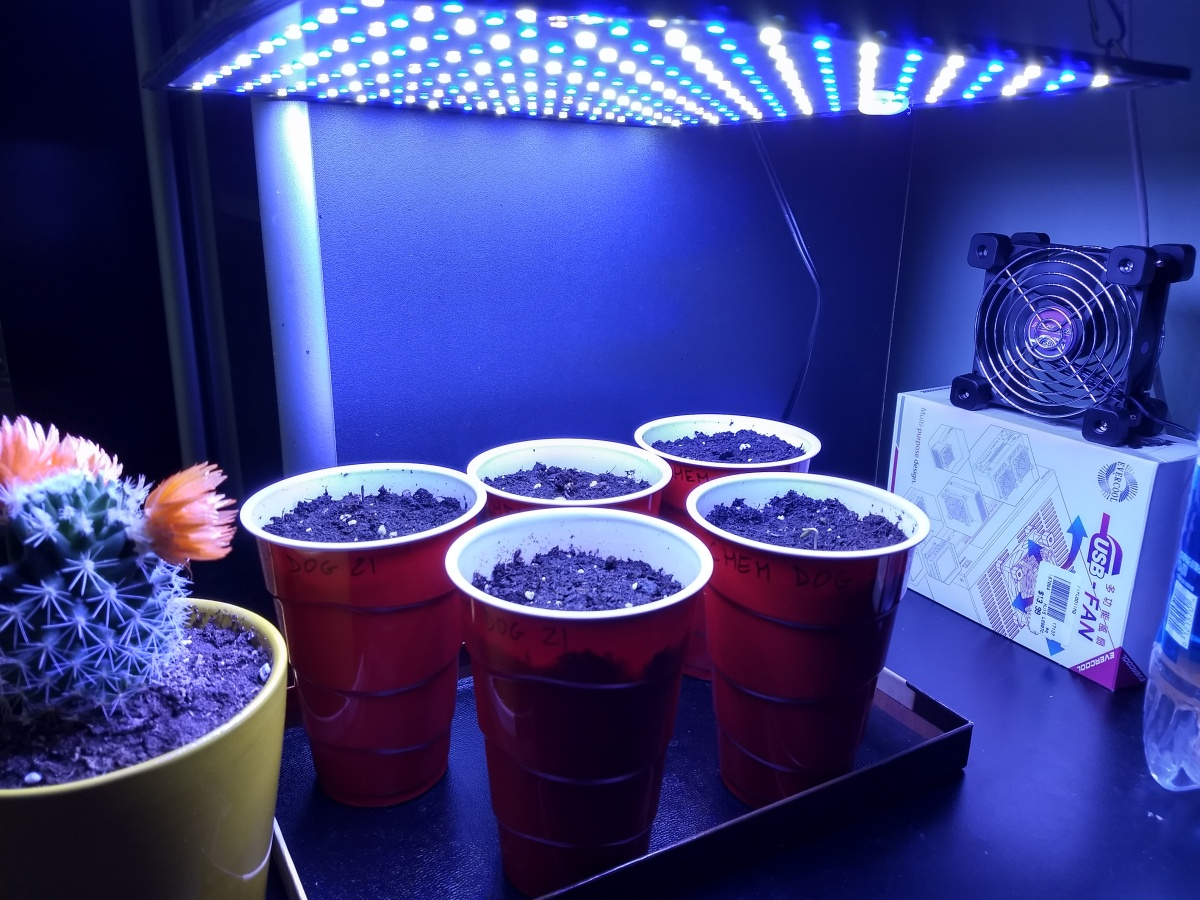 """DynaChem"" in solo cups under the new LED light."